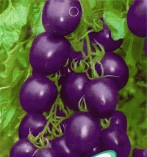 Benih Biji Tomat Ungu Import - Purple Tomato Seeds - Repack 5 biji
