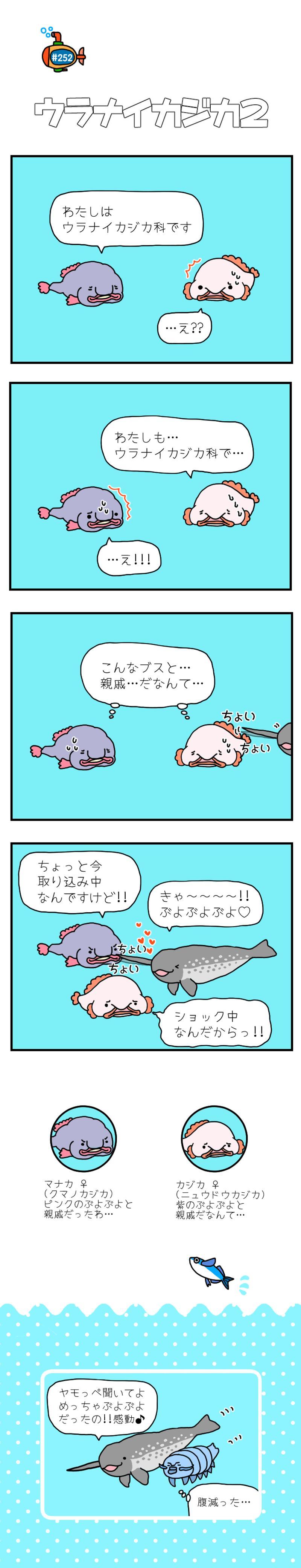 カジカ 入道