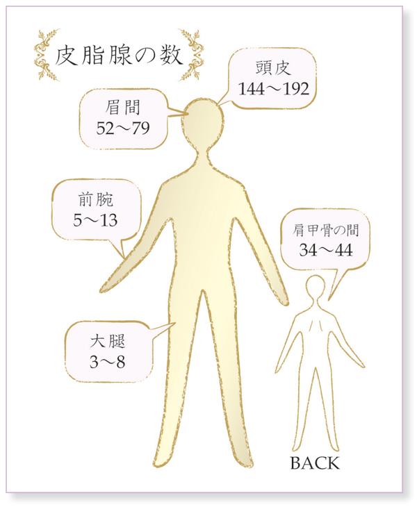 「体 皮脂腺 無料画像」の画像検索結果