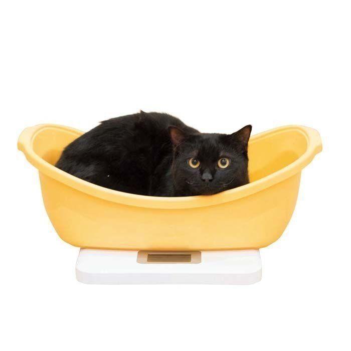 ない 子猫 体重 増え