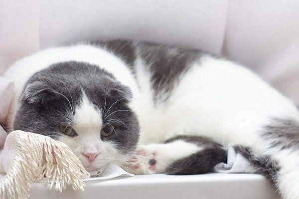 猫 鼻くそ が 黒い