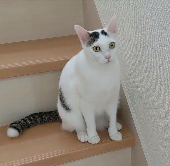 が 反応 する 鳴き声 猫