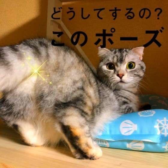 せん 猫 こう もん