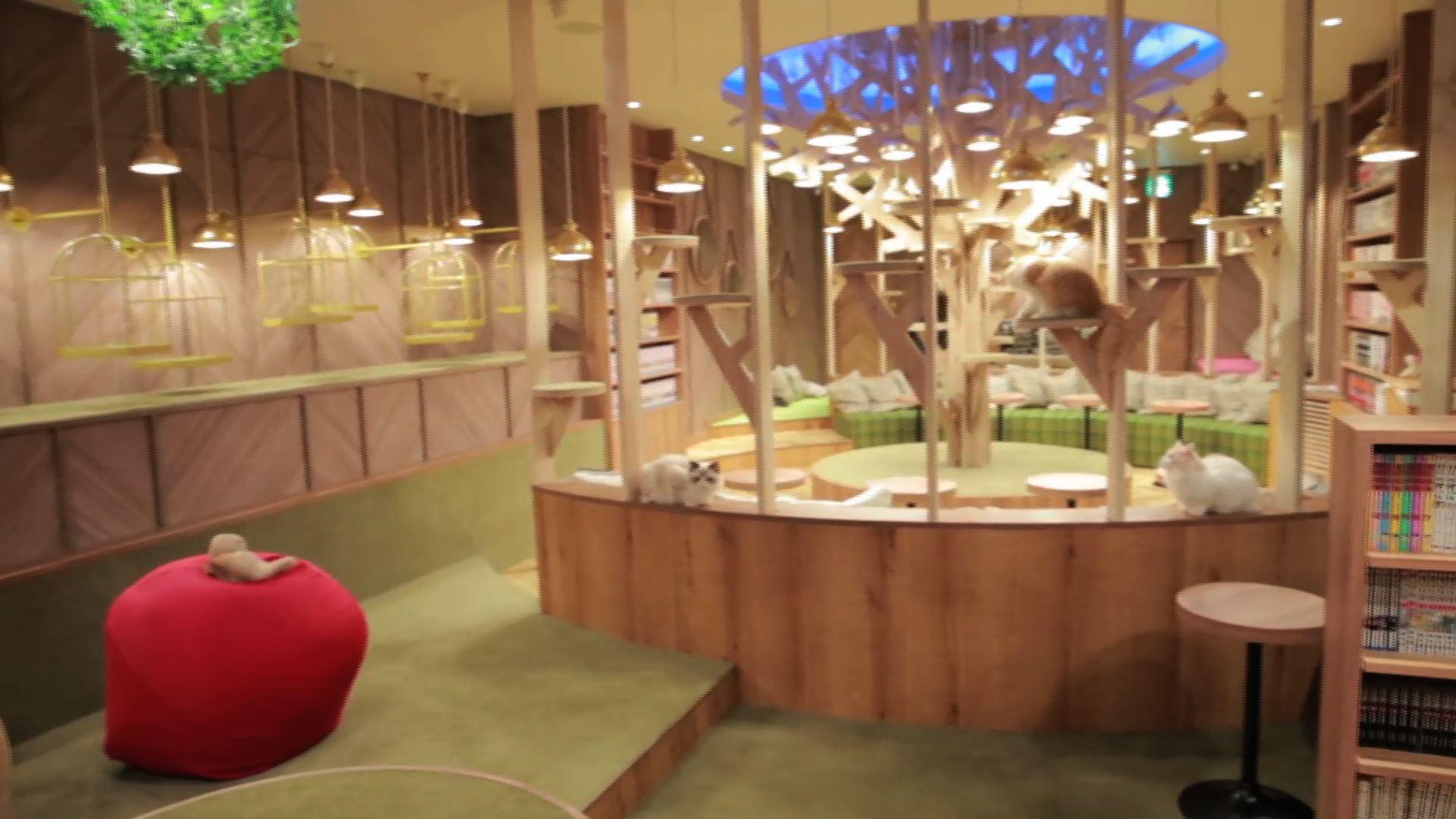関西初上陸のおしゃれすぎる猫カフェ! 「猫カフェ mocha」で癒やされて
