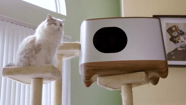 猫 トイレ 自動