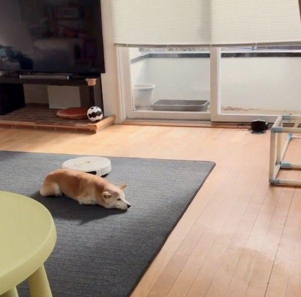 寝る場所 犬