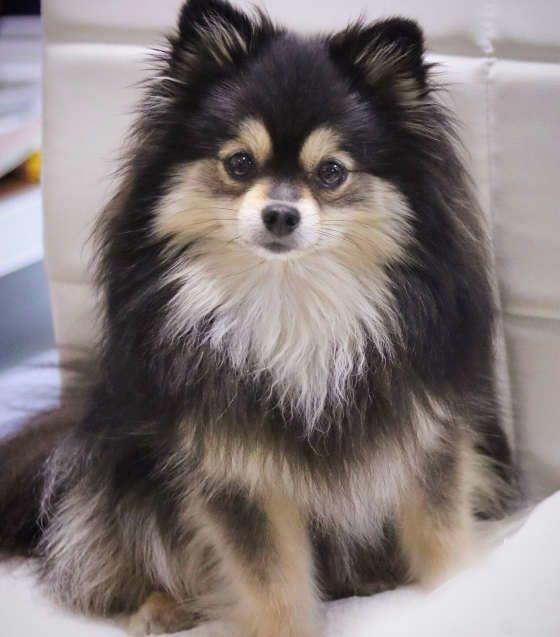 ストレス 実はリラックス 犬がため息をつく理由
