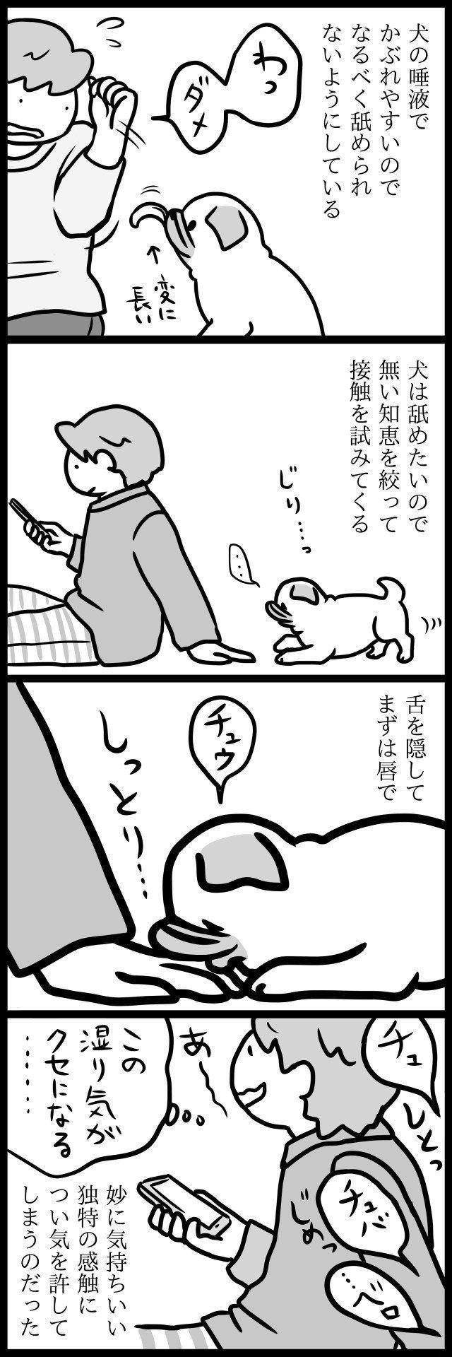 て を なめ くる 犬 が 口 【犬が舐めてくるのがしつこい!】汚いペロペロをやめさせる方法