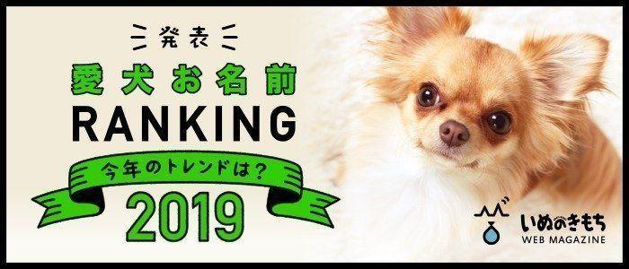 2020年にくる名前はコレ 犬の人気名前ランキング2019