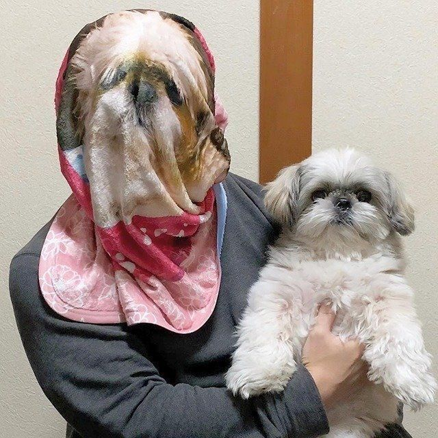 症状 老 犬 最期