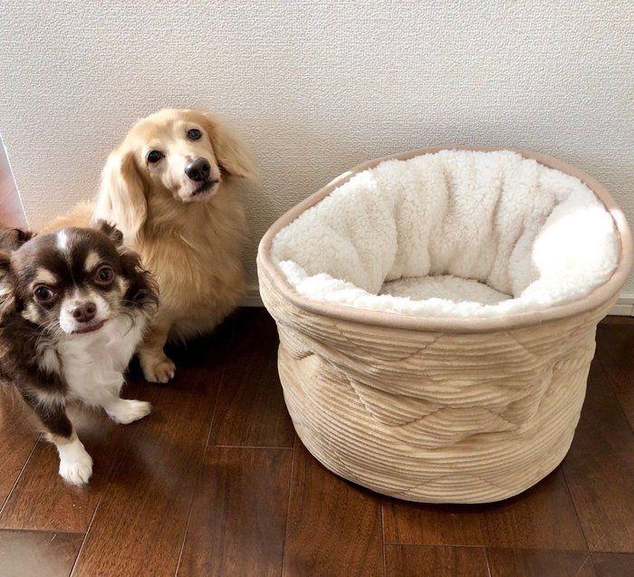 ニトリ 犬 を ダメ に する ベッド