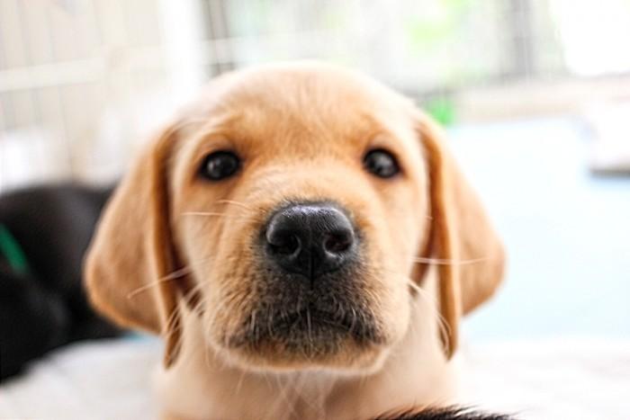 犬の関節炎は ちょっとしたサインを見逃さないで