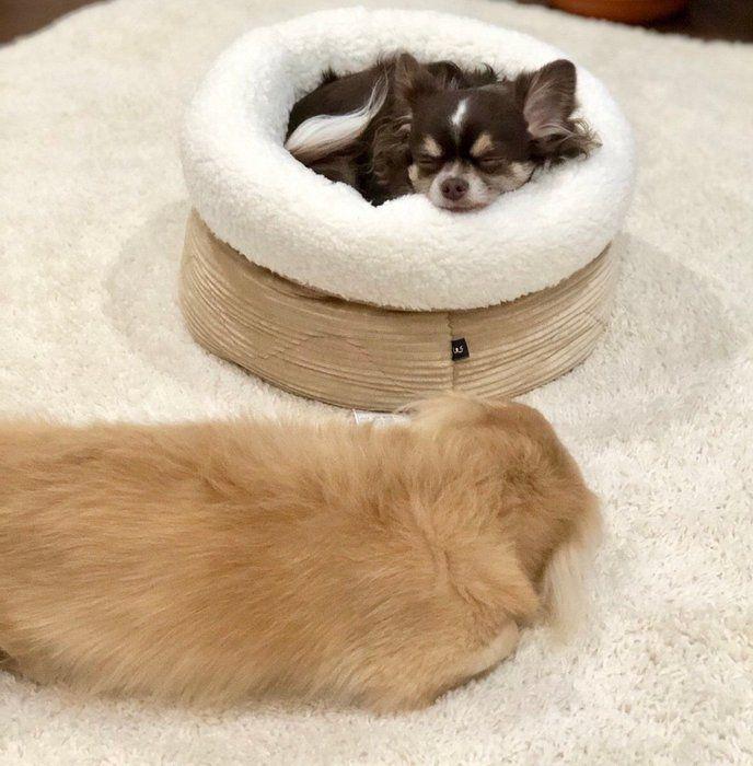 ペット ベッド ニトリ
