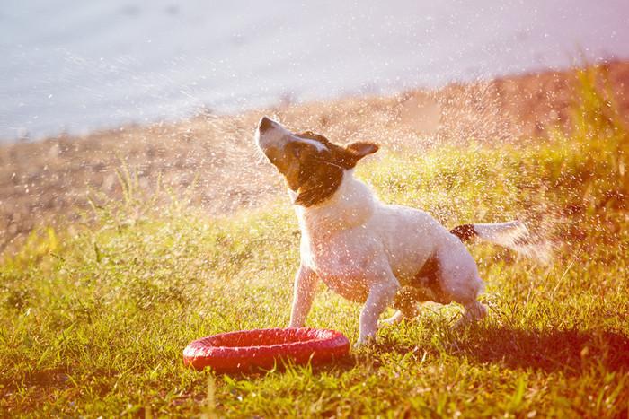獣医師監修 犬はどうして震えるの その原因と対処法とは いぬのき