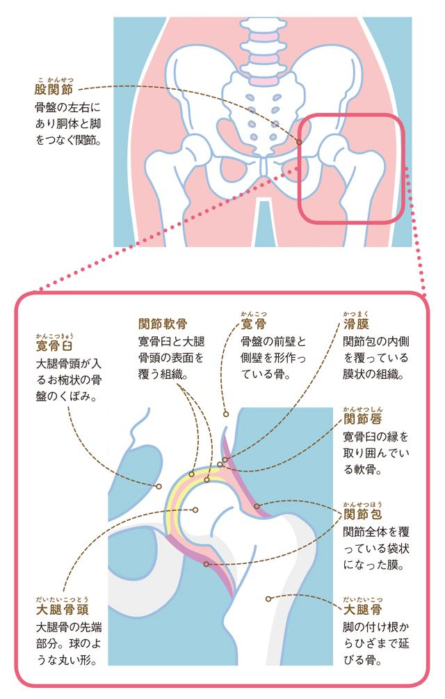 妊娠超初期 足の付け根
