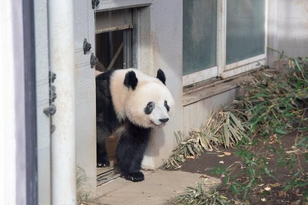 上野 動物園 デイパン ジャイアントパンダ保護サポート基金について ~ひろげよう!パンダの夢~|上野動物園のジャイアントパンダ情報サイト「UENO