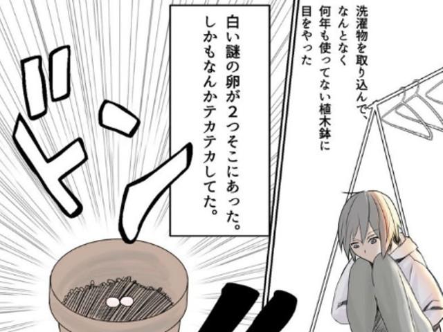 """ベランダの植木鉢に突然""""卵""""が現れた体験描く漫画が話題に - LINE NEWS"""