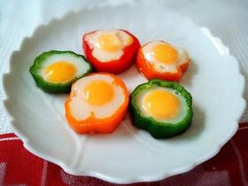 冷凍 卵 うずら の