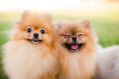 老犬と子犬を一緒に飼うのは可能 気をつけたい注意点3つ わんちゃん